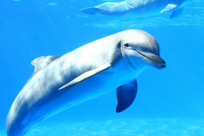 Це цікаво: півкулі мозку китів сплять «наполовину».