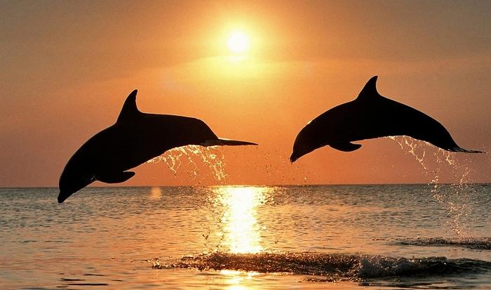 Сонное царство: дельфины и киты спят «вполглаза».