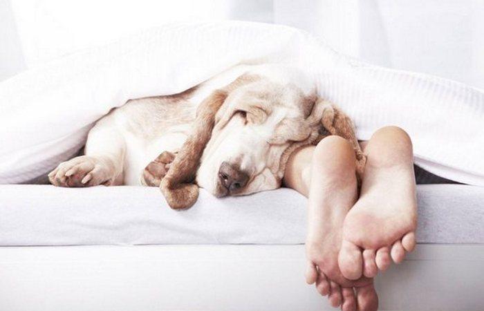 Спят собаки и слоны. Дяди спят и тёти...