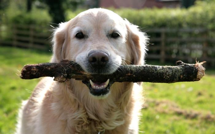Как вести себя правильно, если напала собака, а счет идет на секунды