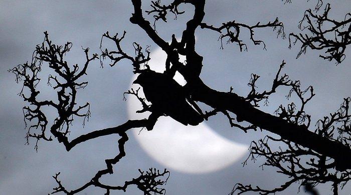 Солнечное затмение: блики, тишина и падение температуры.