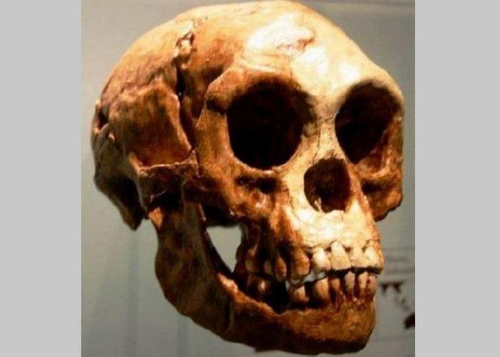 Странное захоронение: череп хоббита.