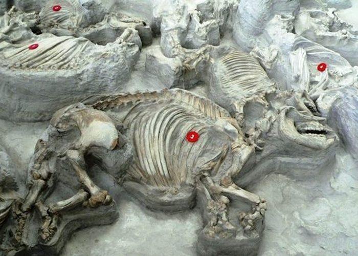 Жуткое захоронение: место массовой гибели животных.