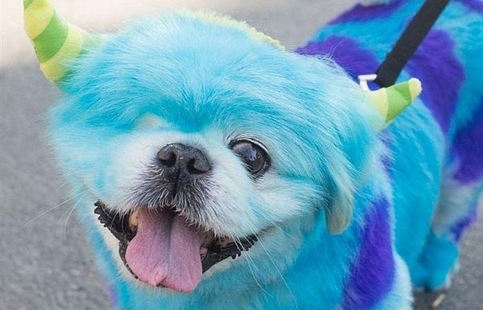 Странная краска для  волос.... собачьих...