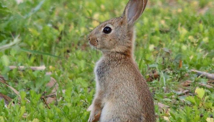 Земля кроликов.