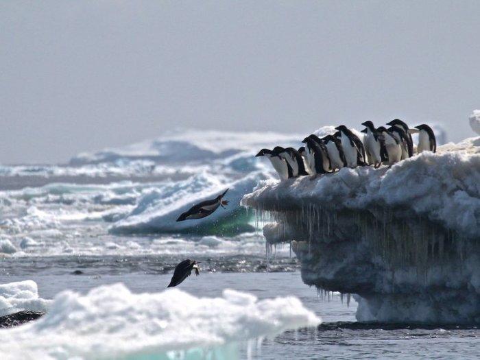 В каждой третьей пингвиней семье есть место для адюльтера и насилия.