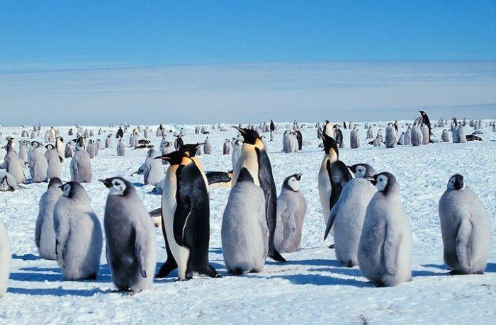 Киднепинг по полярному.