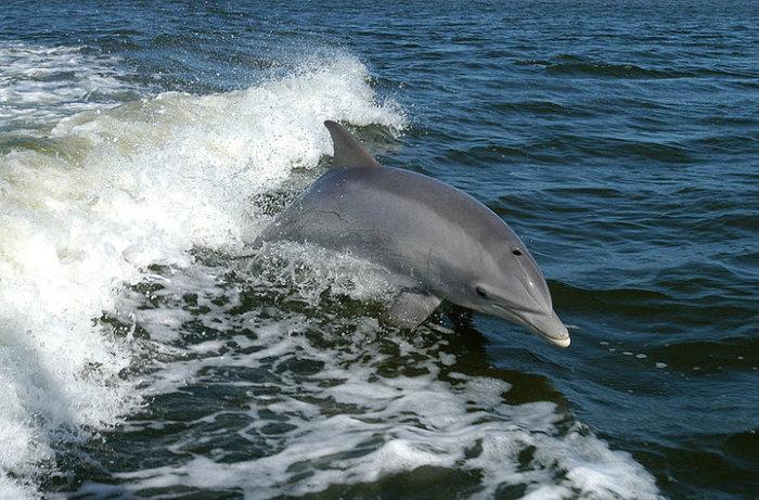 О чем говорят дельфины?