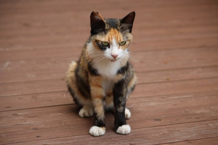 Твое лицо, когда говорят, что котики совсем не милахи.