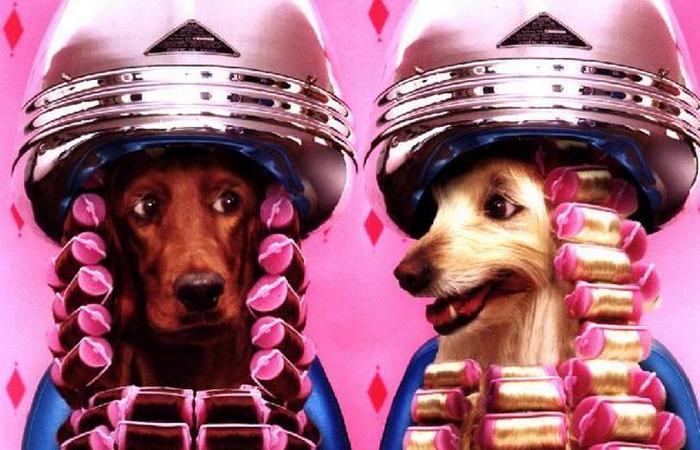 Под запретом: домашние животные в салоне красоты.