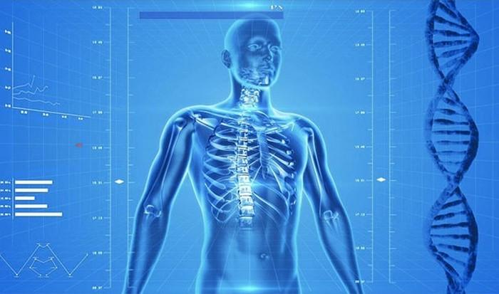 Тело человека биолюминесцентно.
