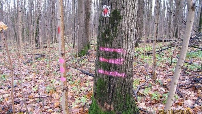 Для этого наносят метки. |Фото: livejournal.com.
