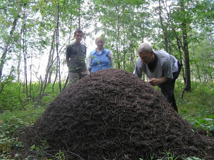 Придется найти еще один муравейник. ¦Фото: foto-planeta.com.