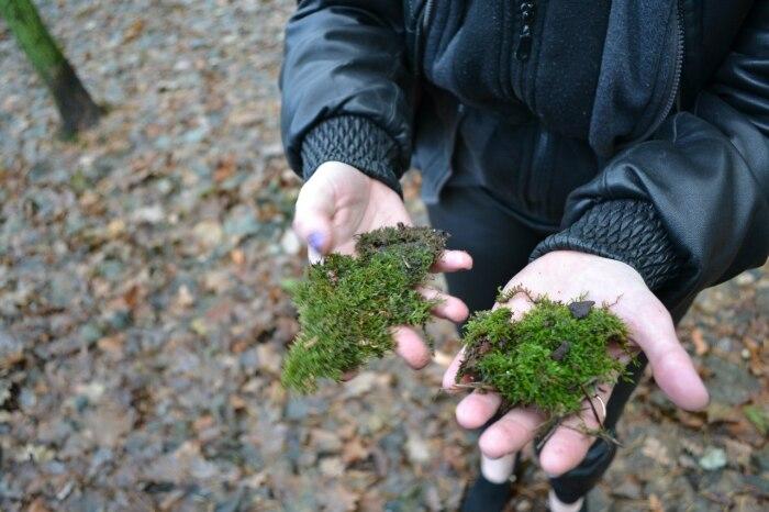 Даже мох теперь нужно собирать правильно. |Фото: forum2x2.ru.