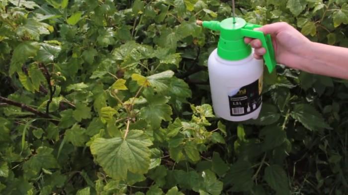 Обрабатываем теплой водой.  Фото: youtube.com.