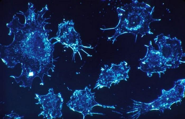 Малярия против рака.