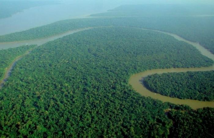 Южноамериканский тропический лес.