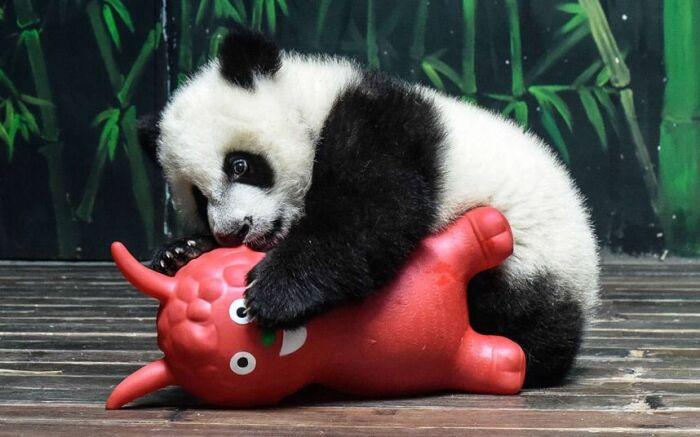 Не стоит забывать о том, что это все еще медведь. |Фото: Pinterest.