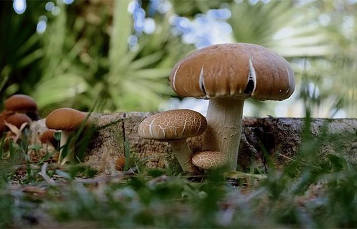 Невероятный факт о грибах. Они скорее животное чем растение...