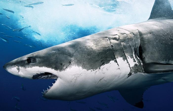 Невероятный факт: акулы древнее деревьев.