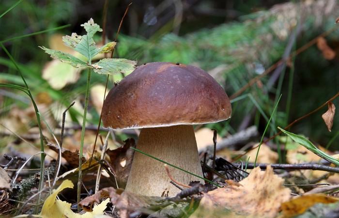 Невероятный факт: гриб скорее животное чем растение...