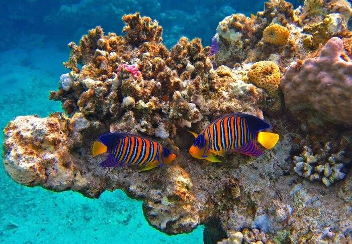 Кораллы - достояние Египта. |Фото: fotosselect.ru.