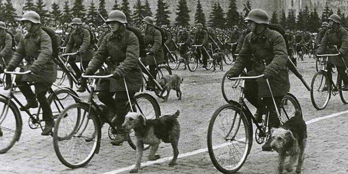 Противотанковые собаки.