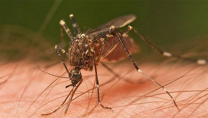 Спирт поможет успокоить зуд от укусов комаров.