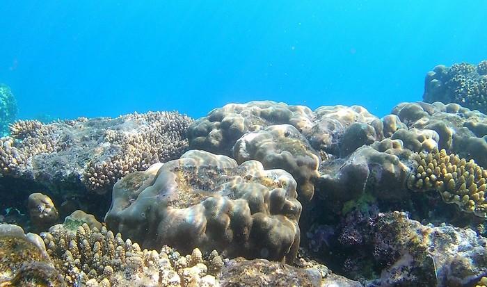 Неразгаданная загадка: что находится на дне океана?
