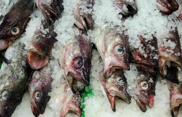Нет существует правил для определения экологичности морепродуктов.