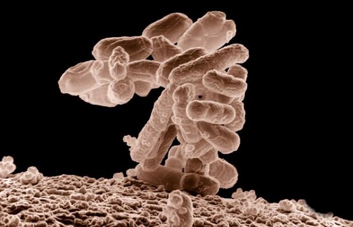 Бактерии-мутанты, микробы мутанты...