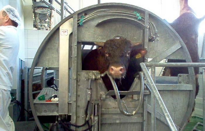 Еще раз о  жестоком обращении с животными.