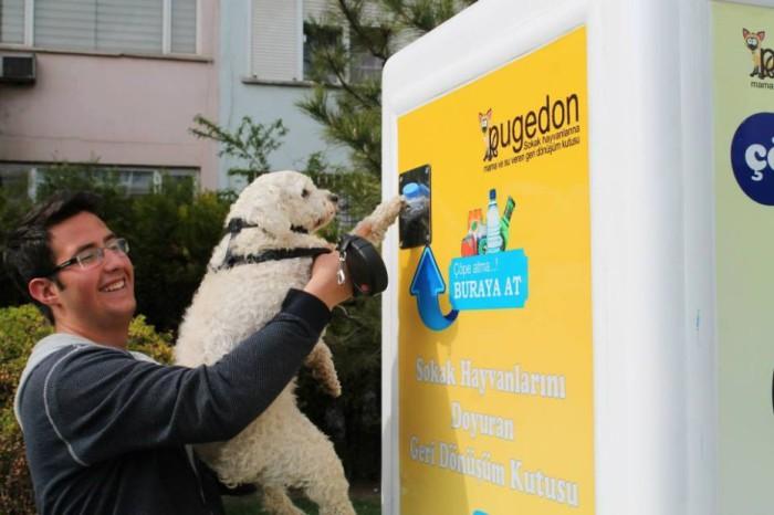 Автомат с кормом для животных.
