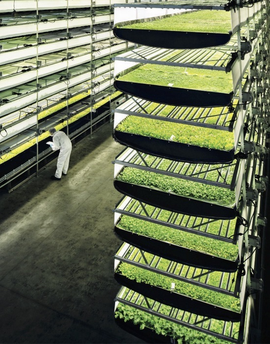 Вертикальная ферма AeroFarms.