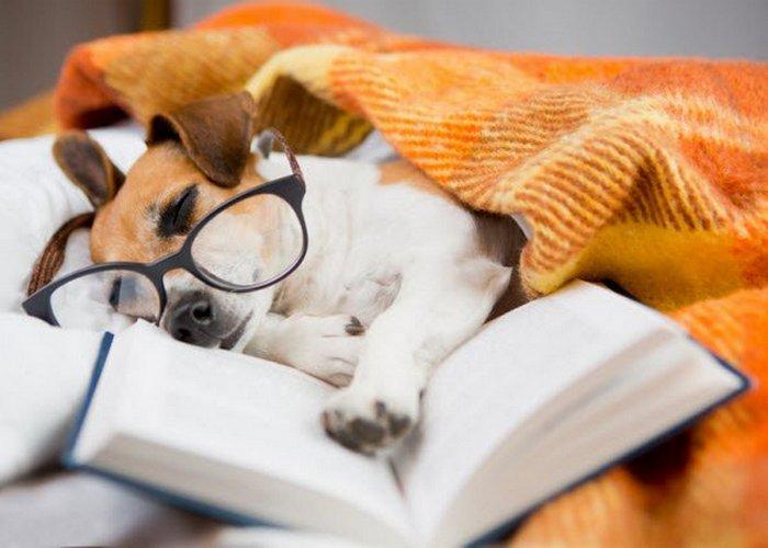 Глупость по-викториански: обучение собак чтению.