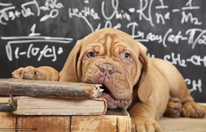 Собака учится читать.