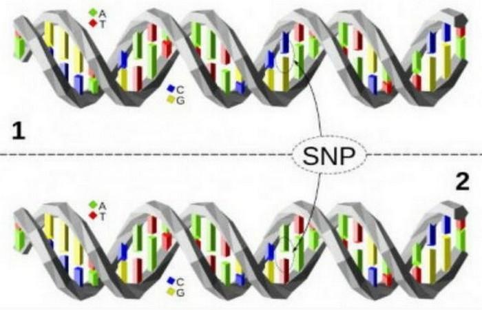 Генетика...