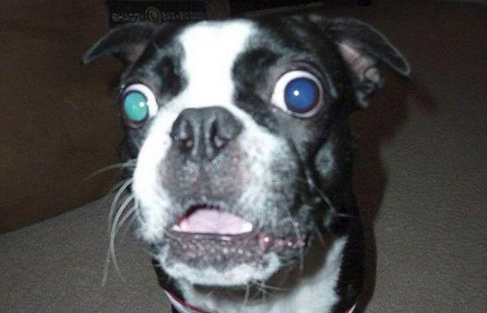 Собака с самыми большими глазами.