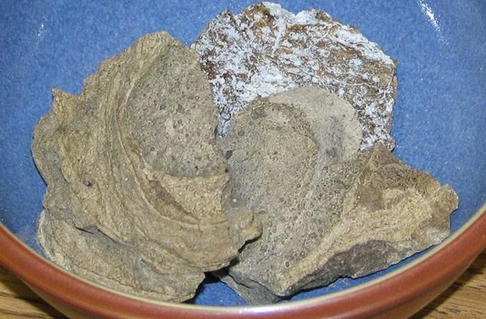 Кишечная секреция кашалотов.