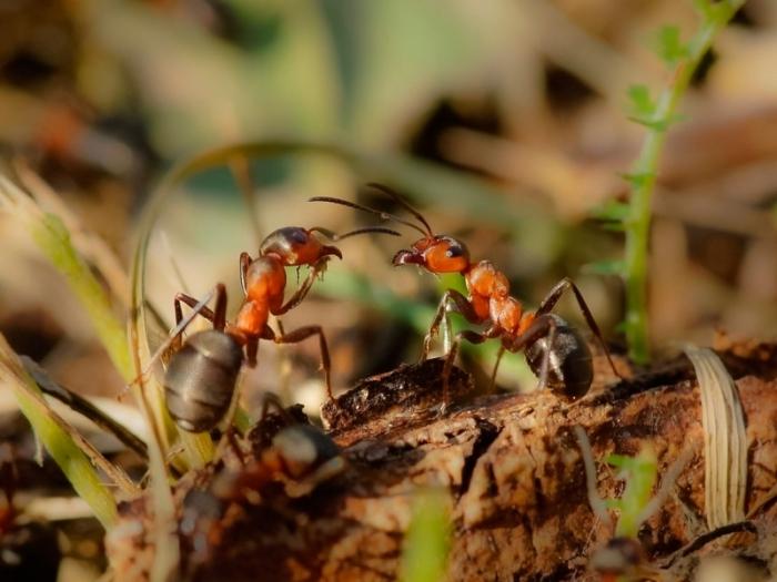 Бедные муравьи. |Фото: multiurok.ru.