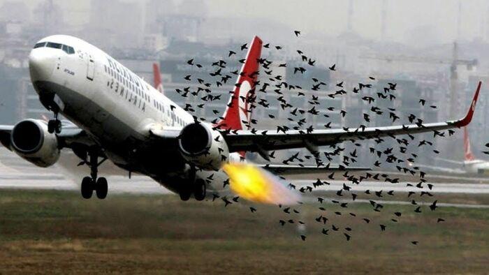 Теоретически самолет даже может упасть. |Фото: meteovesti.ru.