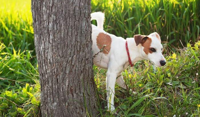 Собаки предпочитают ровные поверхности. |Фото: onepoundfish.net.