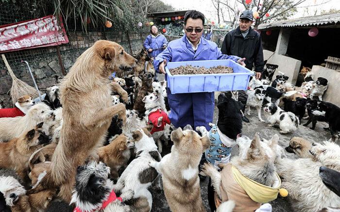 Собак в Азии любят. |Фото: diary.ru.