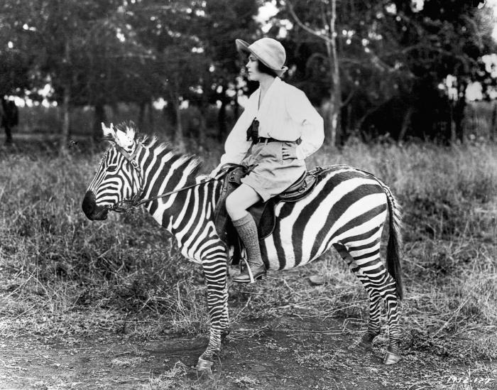 Зебры маленькие и слабые. |Фото: fishki.net.
