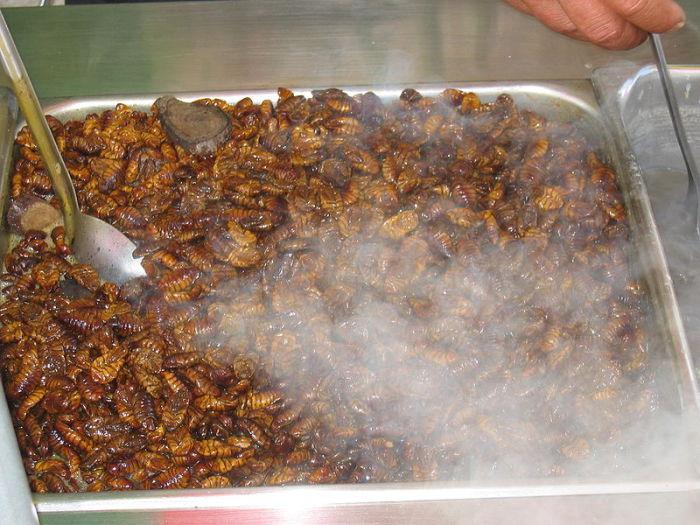 Cocinado pupas del gusano de seda.