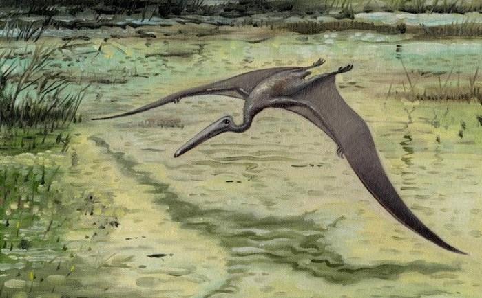 Летающий ящер конгамато.