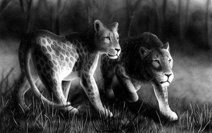 Одинокий лев марози.