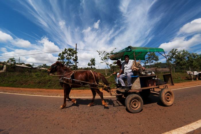 В Бразилии заботятся и о лошадях.