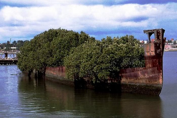Заброшенный корабль в бухте Домбуш «SS Ayrfield».