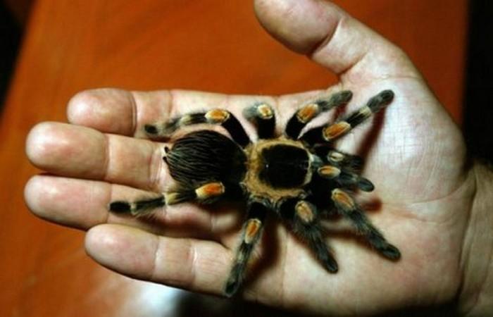 Вы арестованы за похищение паука.